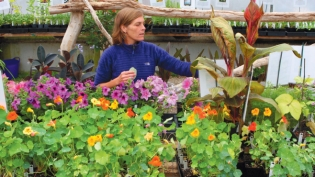 Jenny Irving in the greenhouse at Miskovsky Landscaping where she sells unqiue and heirloom plants for just six weeks a year.